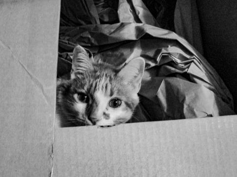 Charlie hiding in box.