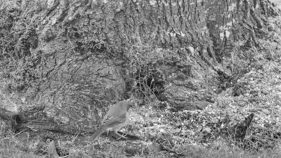 Little bird feeding the ground