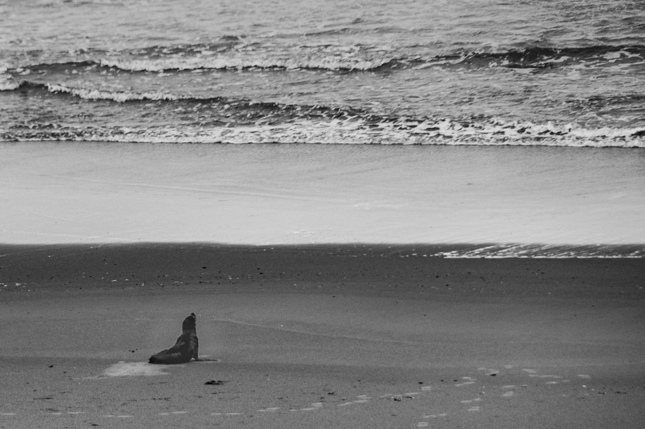 A lone seal on the beach.