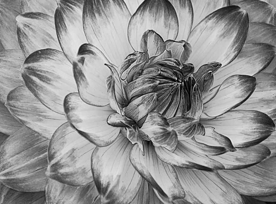 062316flower_3