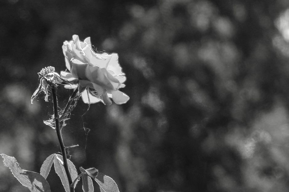 062316flower_5