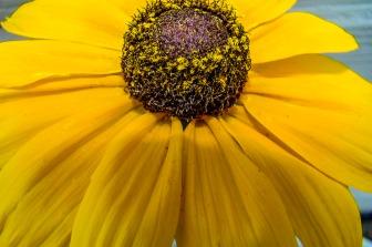 072416flower