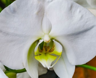 072516orchid