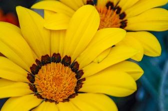 072716flower