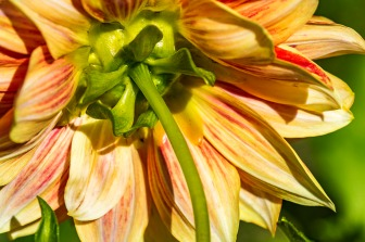 072816flower