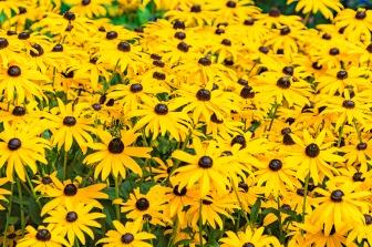 081116flower