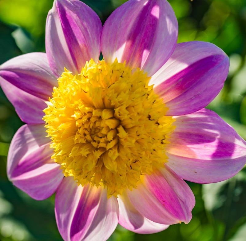 091516flower