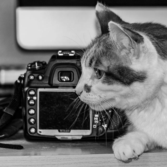 Cat and camera