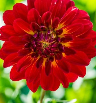092316flower