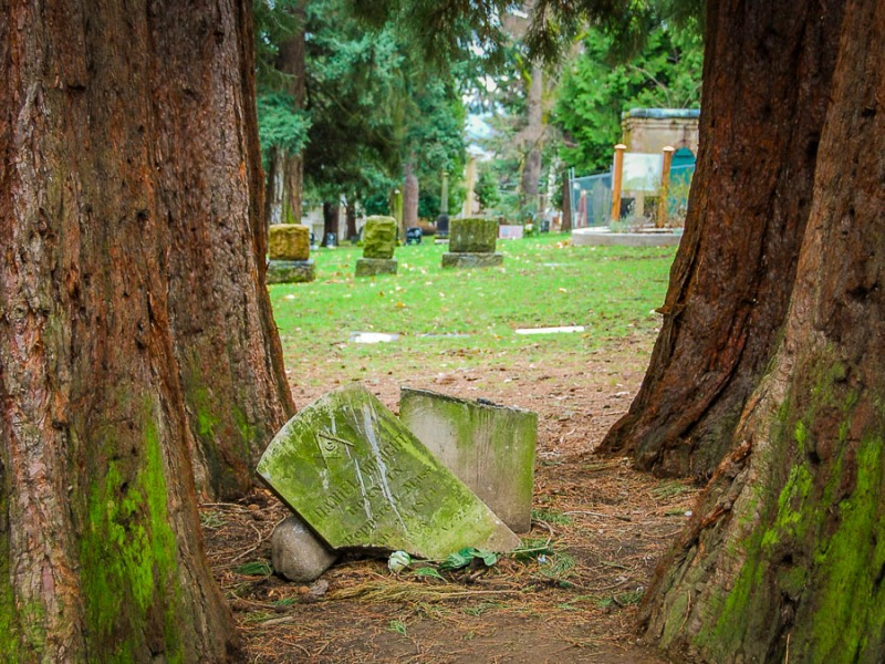 Why did these four huge trees not protect the people's gravestones?
