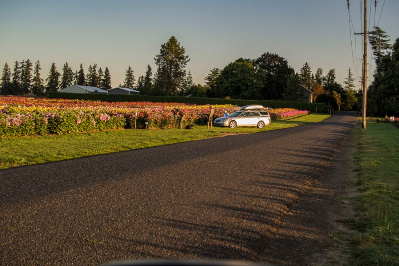 Street that runs through the dahlia farm, Canby, Oregon.