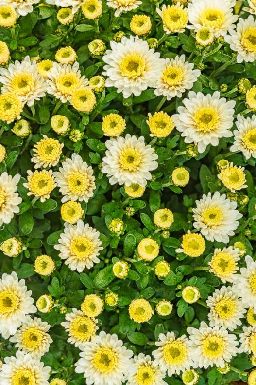 102616flower
