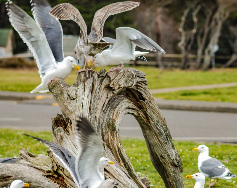 We were feeding the seagulls at Roads End Beach in Lincoln City, Oregon.
