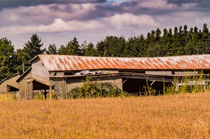 And old pole barn with rusty roof, Canby, Oregon.