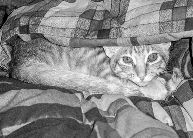 Freddie as a kitten (17 years ago) hiding under a warm comforter.