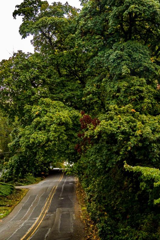 A street in Oregon City, Oregon.