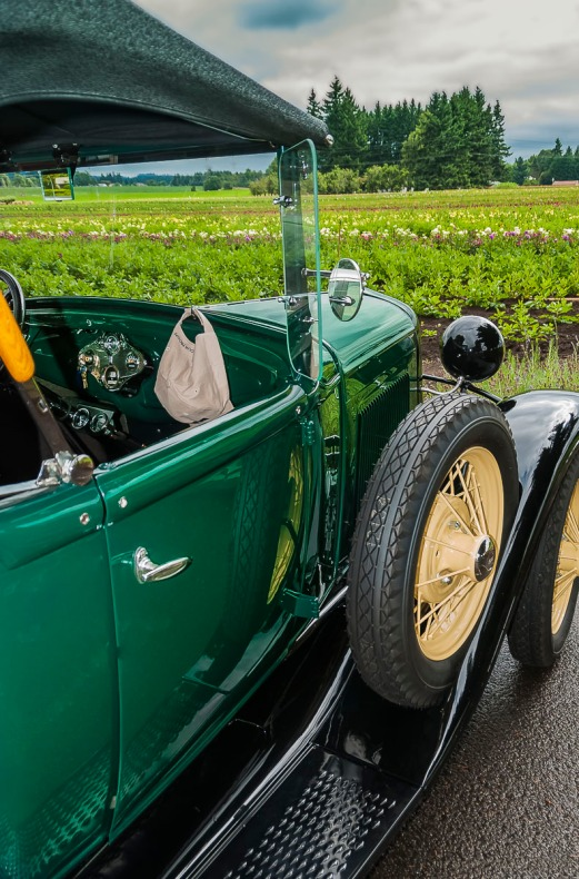 Vintage Ford at Swan Island Dahlias, Canby, Oregon.