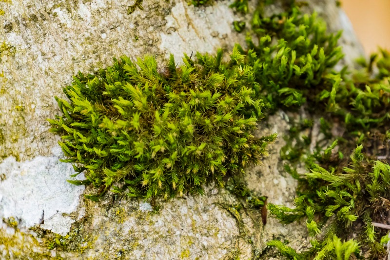 Tree bark and moss.