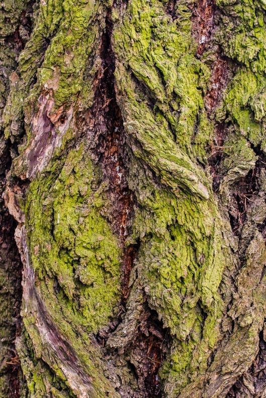 Tree bark with moss.