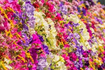 122916spring-flowers