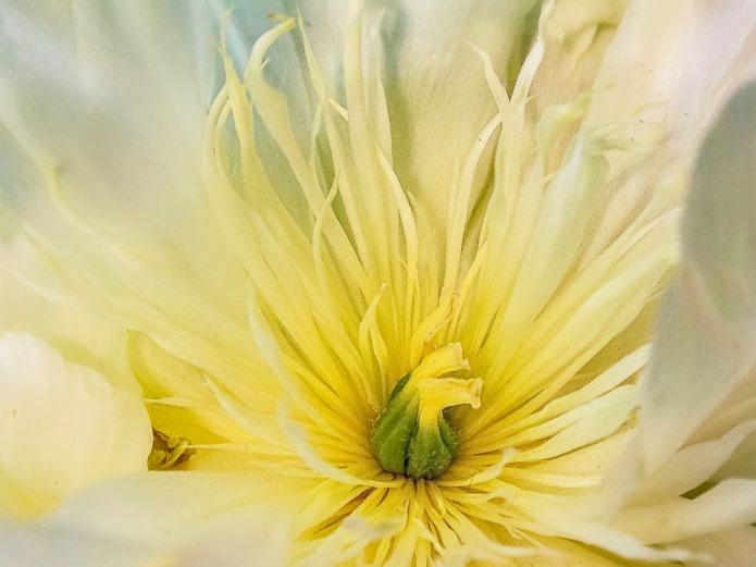 010217flower