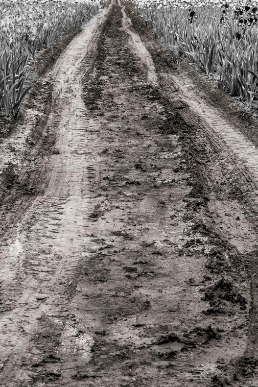 Dirt road.