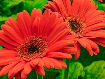 010517sunset-orange_1