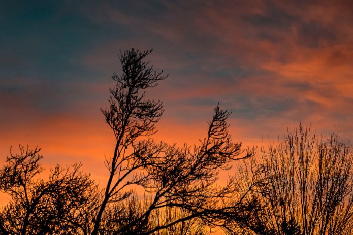 Sunrise out my backyard in the wintertime.  It isn't often we get color for sunrise, but when we do it is gorgeous.