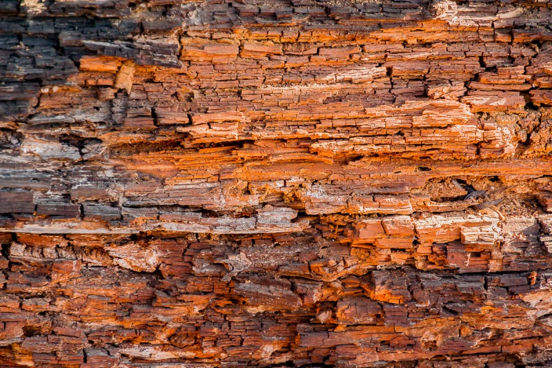 Old weathered log.