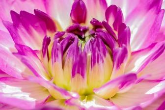 011417flower