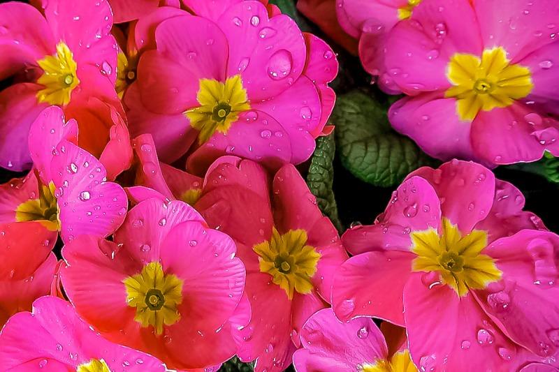 011517flower