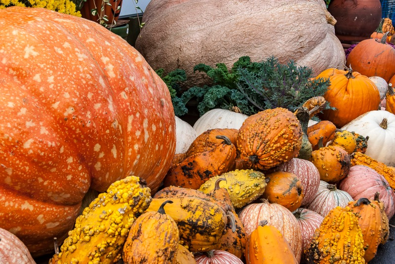 Two giant pumpkin (500 lbs or better) and smaller gourds.
