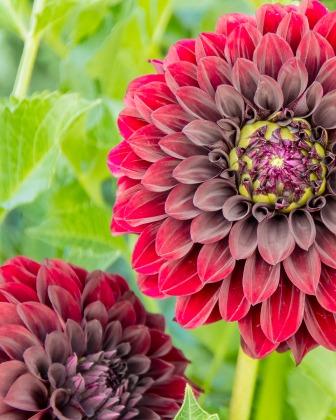 012917flower