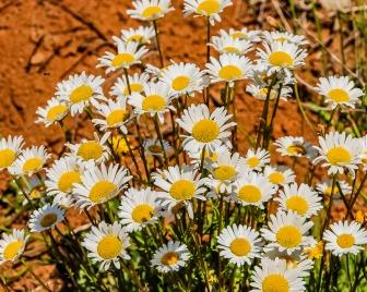 013017flower_1