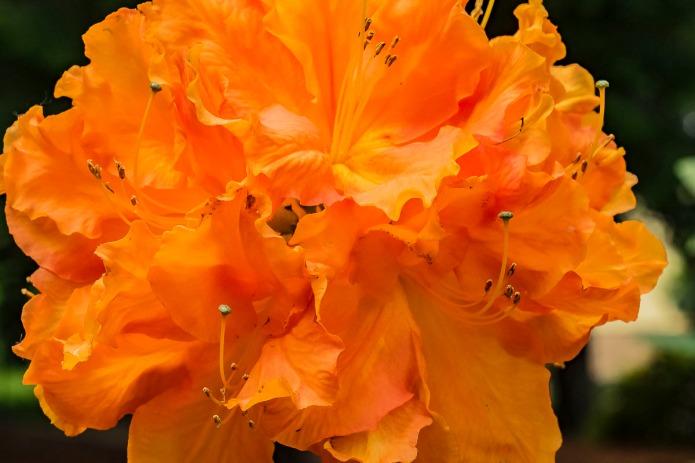 013017yellow-orange