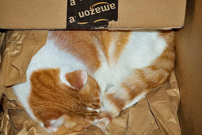 Charlie inside a box.