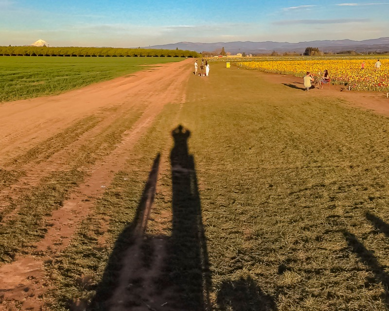 Long Shadows at the Wooden Shoe Tulip Farm.  You can see hazel nut orchards and Mt Hood in the background on the left.