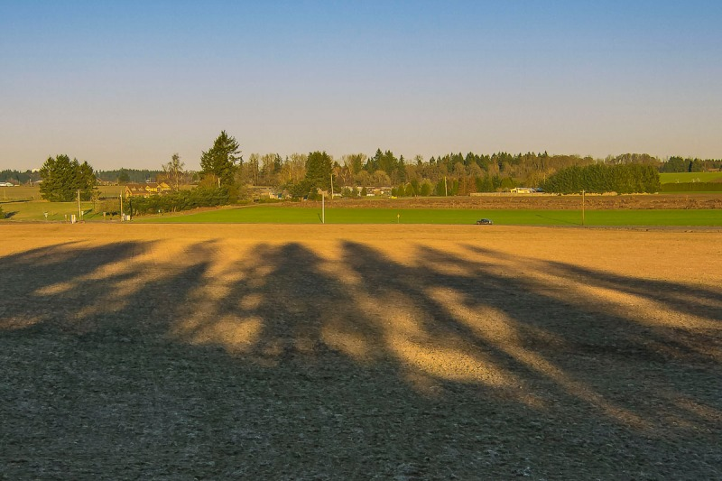 Long shadows of trees.  Canby has one overpass and it is at the edge of town.  This is a photo looking east.