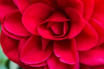 020917flower