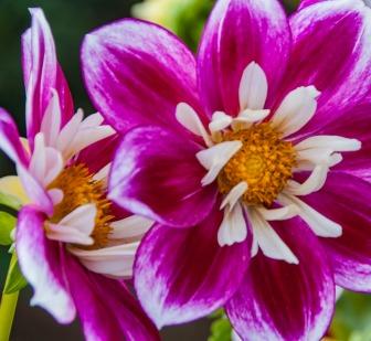 021217flower