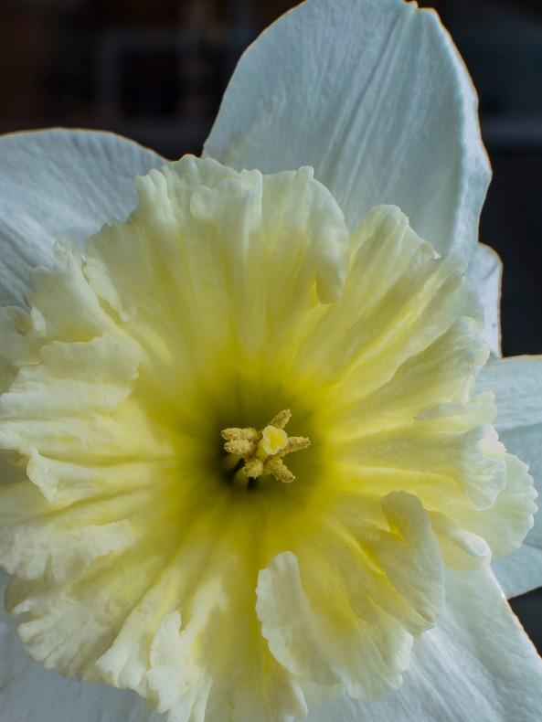 022117flower