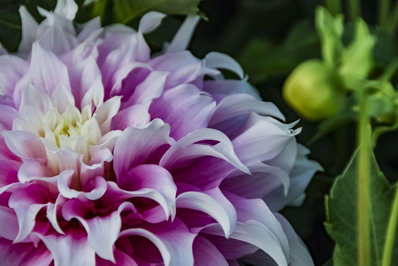 022217flower
