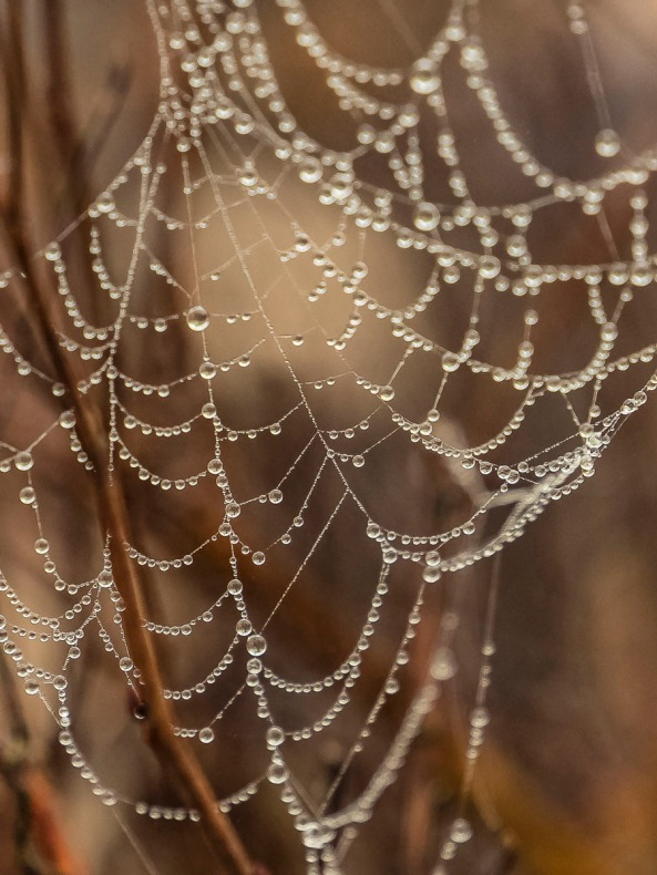 Spider web and dew drops.