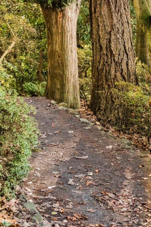 Trail and trees.
