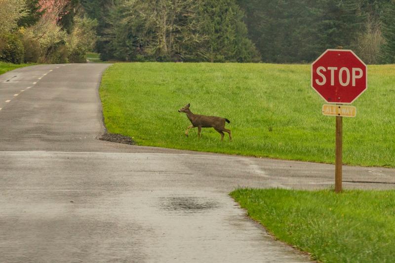 Photo taken in Milo McIver State Park in Estacada, Oregon.