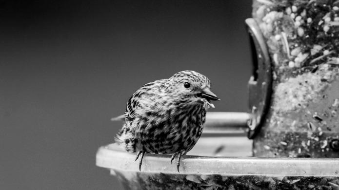 Bird and Bird Feeder