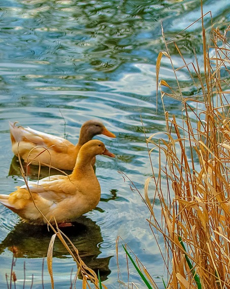 Relaxing and enjoying the moment at a nearby pond.