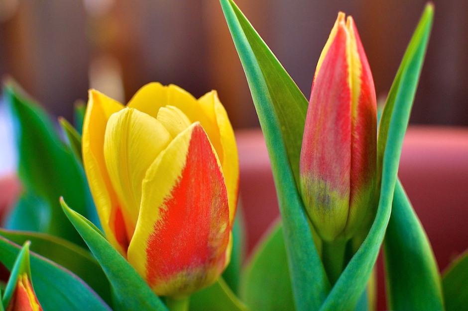 031014-first-flowers.jpg
