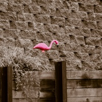 Pink Squares:  Flamingo