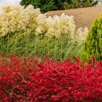 FOTD - November 16, 2018 - Pampas Grass & Autumn Leaves